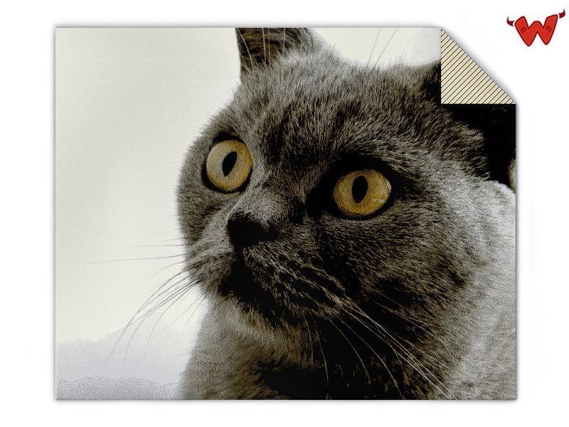 Cat photo blanket